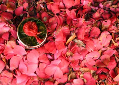 Camellia bush reflection by Student Penny Halleen