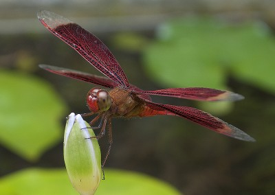 Dragon Fly by Student Jan Morgan